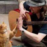 """A Spasso con Bob: la vera storia del gatto """"arancione"""" che ha conquistato lo schermo"""
