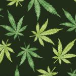 In provincia di Napoli arrestato uomo che coltivava marijuana in casa