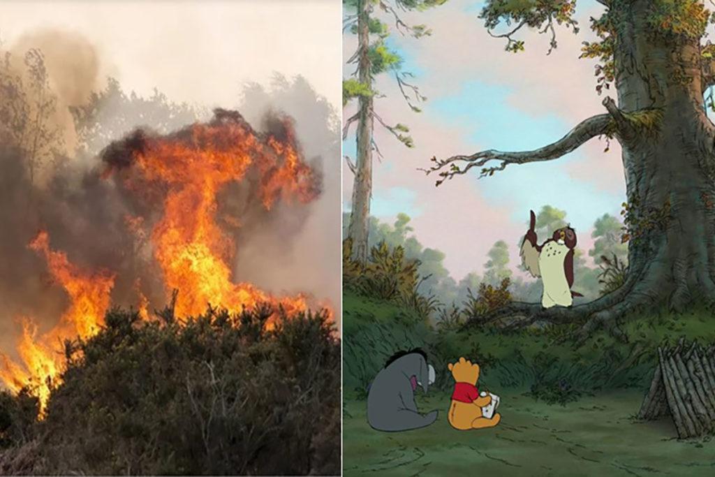 incendio foresta winnie the pooh