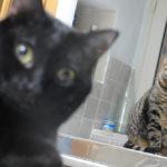 Un'anziana signora lascia una immensa eredità ai gatti: la storia di Lina da Bologna