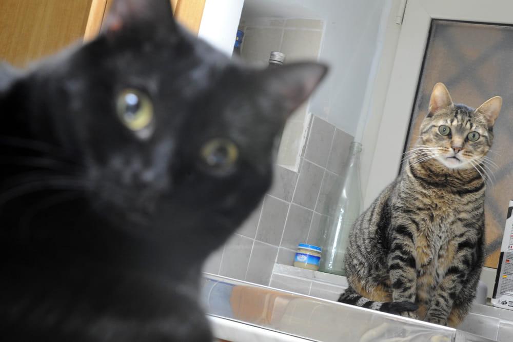 donna lascia eredità ai gatti