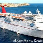 Meow Meow Cruise: la crociera per gli amanti dei gatti