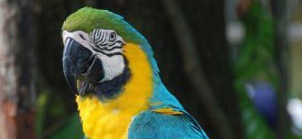 pappagallo traffico droga