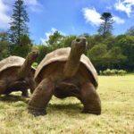Jonathan ha 187 anni. La tartaruga è l'animale più vecchio del mondo