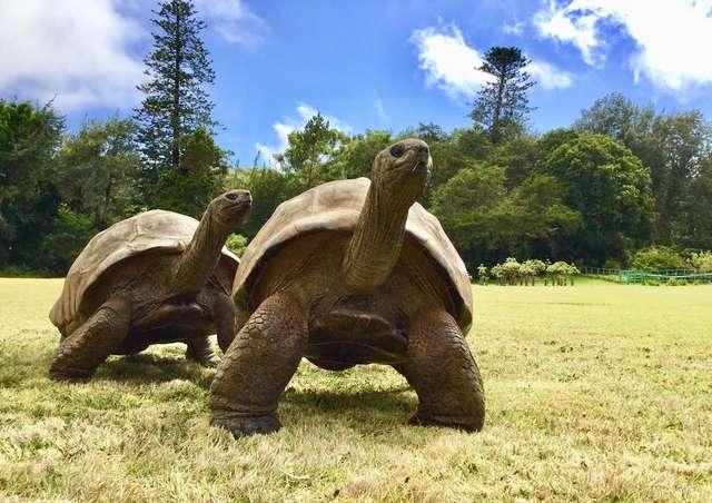 tartaruga longeva