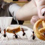 Stop a zanzare, formiche e mosche. I rimedi naturali allontanare gli insetti